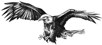053_Resource_Eagle