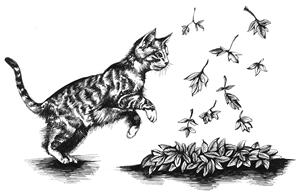 062_Resource_Kitten